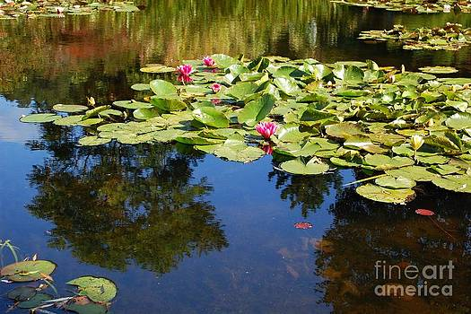 From Monets Garden 4 by Katerina Vodrazkova