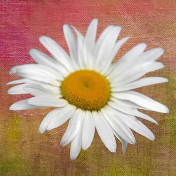 From My Daisy Garrden by Denyse Duhaime