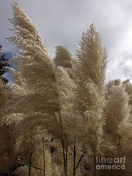 Fronds in the Wind by Scott Shaw