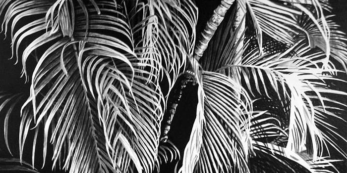 Fronds by Scott Robinson