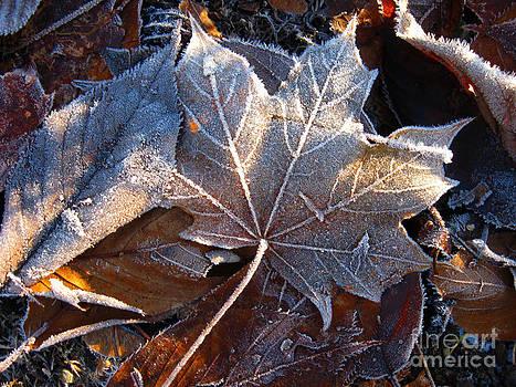 Ellen Miffitt - Frost on Fallen Leaves