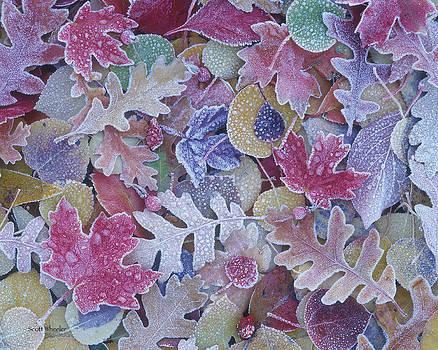 Scott Wheeler - Frost on Leaves
