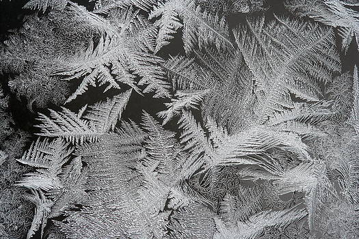 Frost Patterns by Carolyn Reinhart