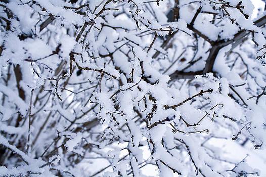 Frost by Sean Eric Pavon