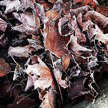 Frosted Autumn Leaves by Virginia Cortland