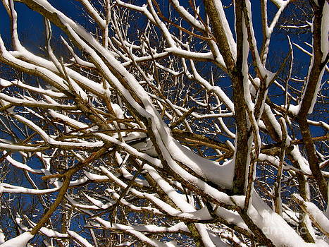Carolyn Kami Loughlin - Frosted Branches