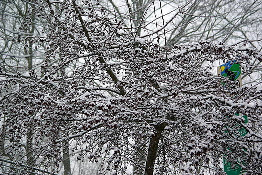Frosted Cherry Tree by Lindy Whiton