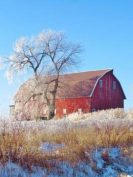 Frosted Country Morning by Lori Frisch