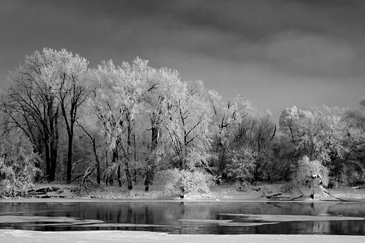 Frosted Trees on the River Black and White by Rob Whitney