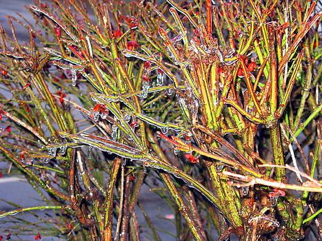 Frosted Twigs by Darryl  Kravitz