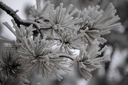 Sherlyn Morefield Gregg - Frostiest Ever