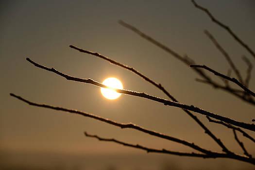 Frosty Branch Sunrise by Micah Flack