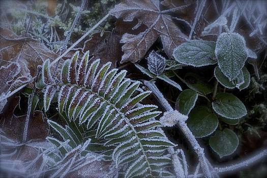 Frosty Day  by Tim Rice