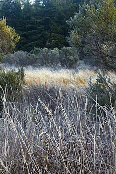 Frosty Grass by Larry Darnell