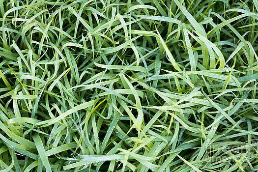 Tim Hester - Frosty Grass