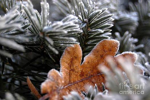 Frosty by Katerina Vodrazkova