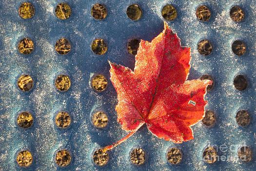 Jonathan Welch - Frosty Leaf