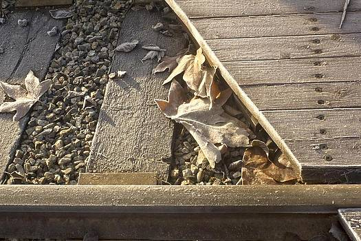 Frosty Leaves and Tracks by Larry Darnell