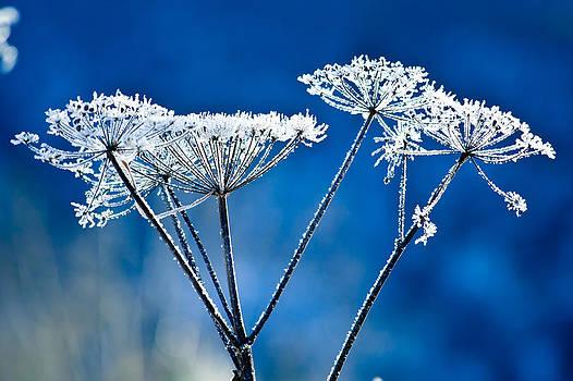 Frosty light by Chris Heitstuman