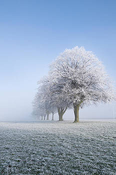 Frosty Morning by Joe Bull