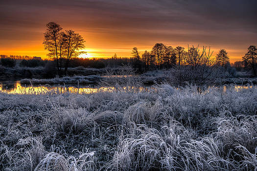 Frosty Morning by Michal Kabzinski