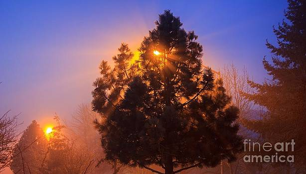 Frosty Sunrise 2 by Michael Cross
