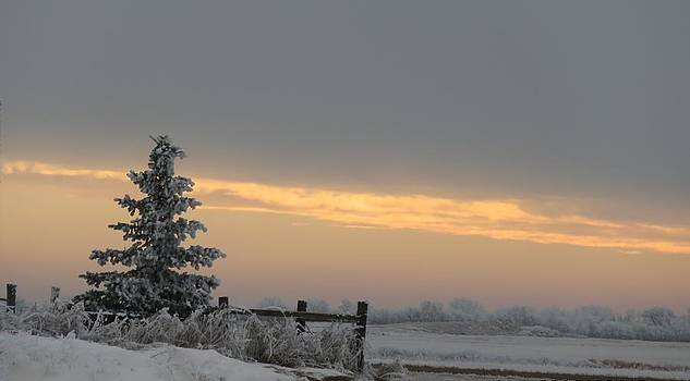 Frosty Sunrise by Linda Koch