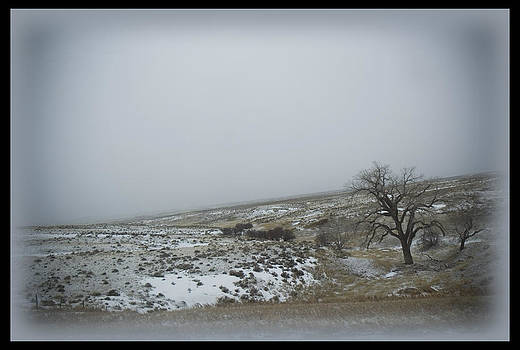 TNT Images - Frosty Tree - 400062