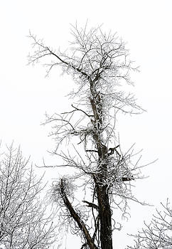 Frosty Tree on the Blue Ridge Parkway by Greg Reed