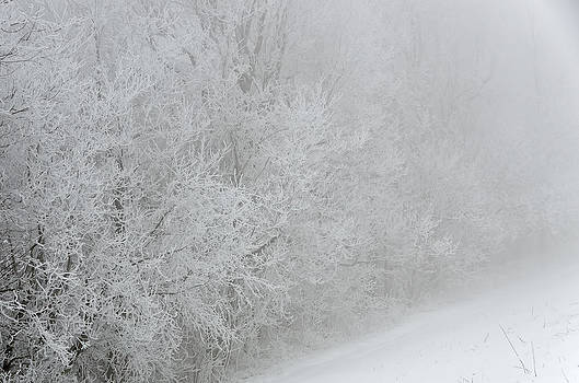 Frosty Trees on the Blue Ridge Parkway by Greg Reed