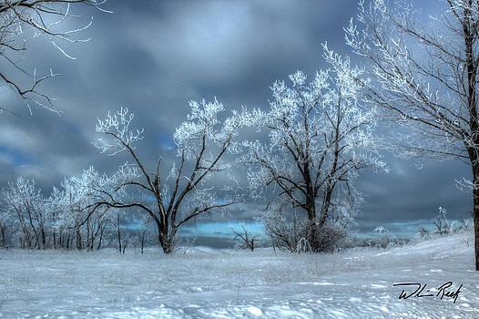 William Reek - Frosty Trees