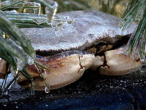 Frozen Crab Meat by Donnie Freeman
