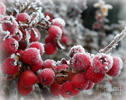 Frozen Crimson by Heidi Manly