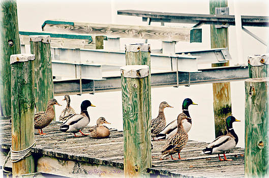 Frozen Duckies by Sheila Noren