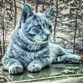 Frozen Feline by Bradley Belcher