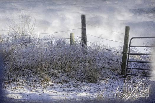 Frozen fence by Joenne Hartley
