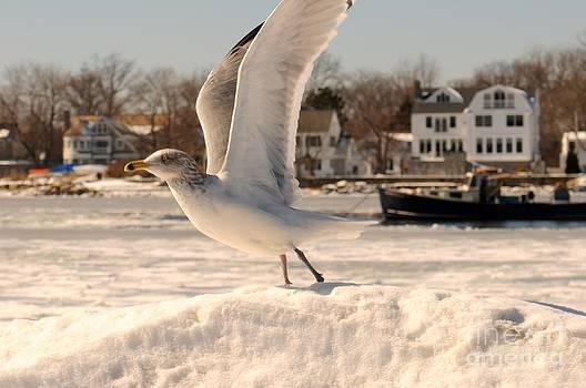 Frozen Flight by Kate Stoupas
