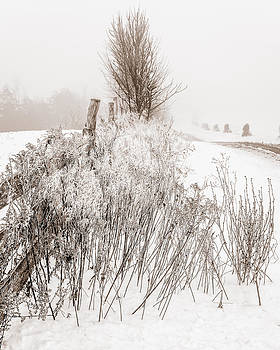 Chris Bordeleau - Frozen fog on a hedgerow - BW