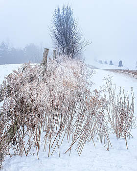 Chris Bordeleau - Frozen fog on a hedgerow