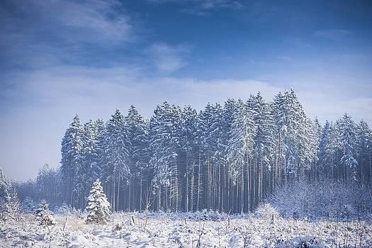 Frozen Forest by Bjoern Kindler