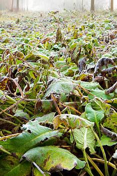 Fizzy Image - Frozen jungle leaves low down