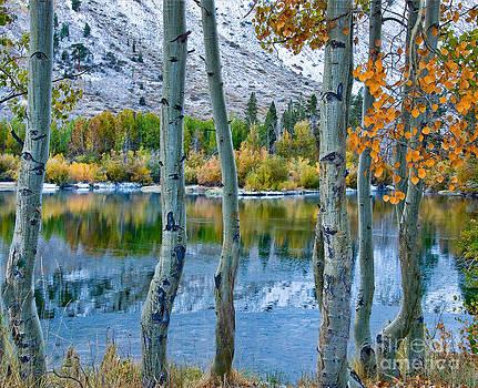 Mae Wertz - Frozen Lake Framed by Aspen