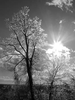 Frozen Sun by Mark C Ettinger
