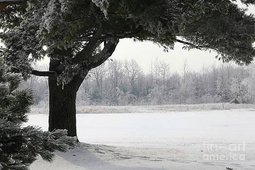 Sophie Vigneault - Frozen Tree Foggy Scenery
