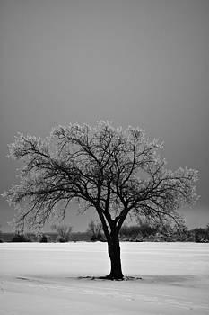 Frozen Tree I by Micah McKinnon