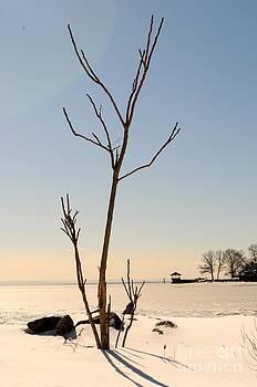 Frozen Tree by Kate Stoupas