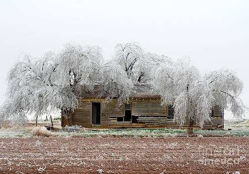 Mae Wertz - Frozen Trees and Shack