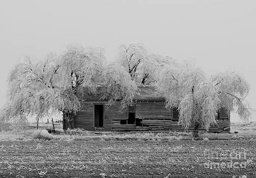 Mae Wertz - Frozen Trees in Black and White