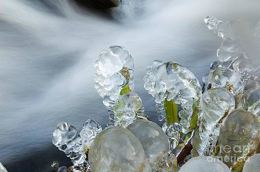 Frozen Wanderland II by Katerina Vodrazkova