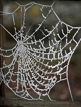 Frozen Web by Ruby And Wolf